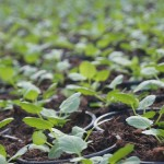 Planting Seeds in New Lands